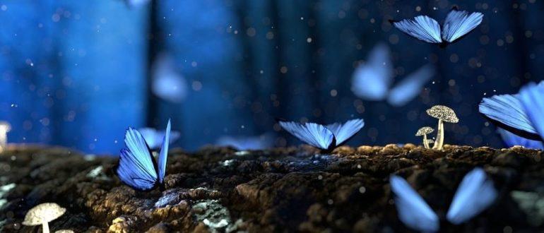 бабочки ночью