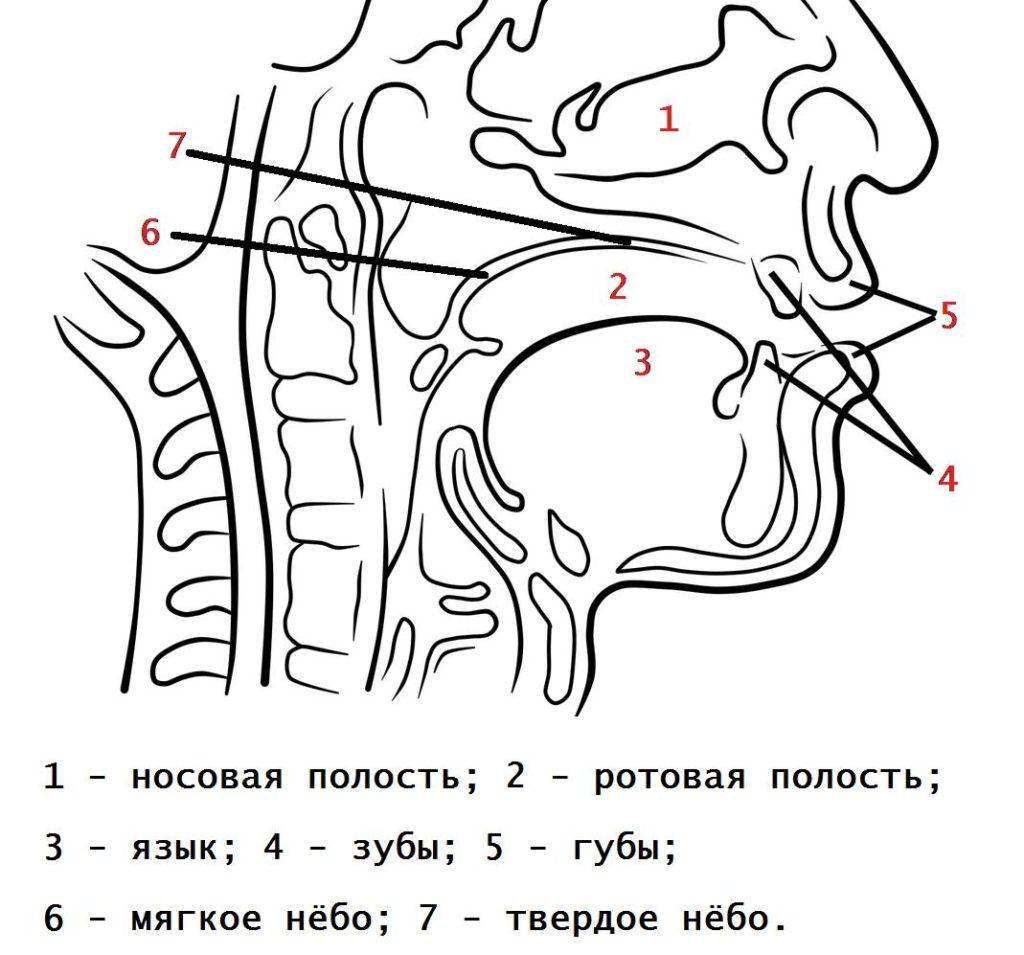 Изменения согласных перед *j в праславянском языке