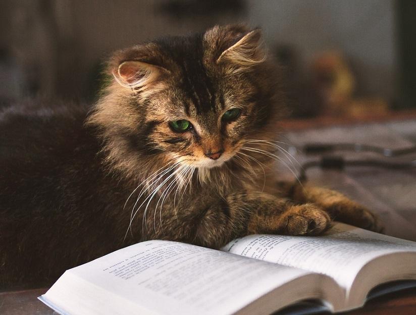 читающая кошка