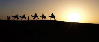 караван верблюдов на рассвете
