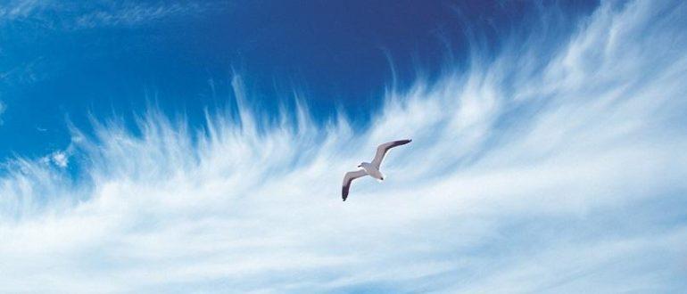 чайка в воздухе
