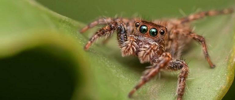 паук на листе