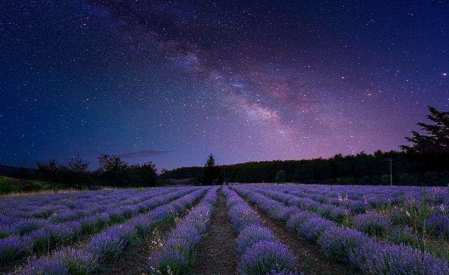 Млечный Путь над лавандовым полем
