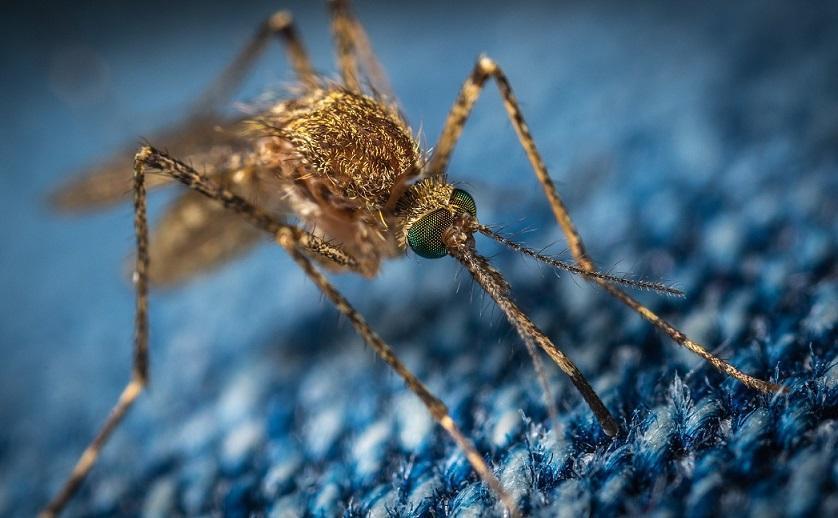 комар, макросъемка